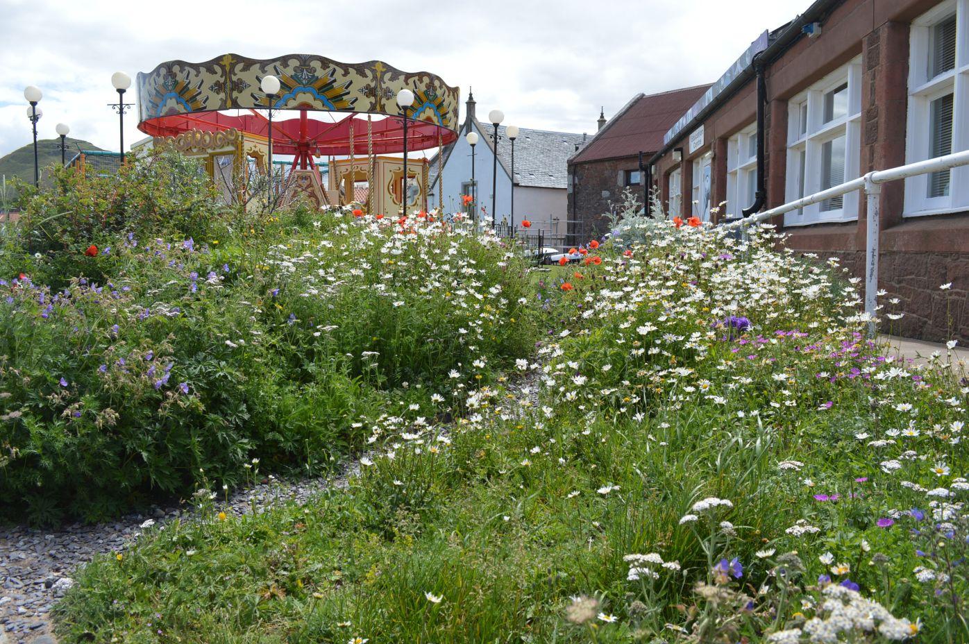 North Berwick coastal wildflowers bed